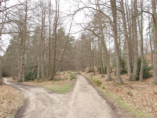 Windsor Ride, Swinley Forest