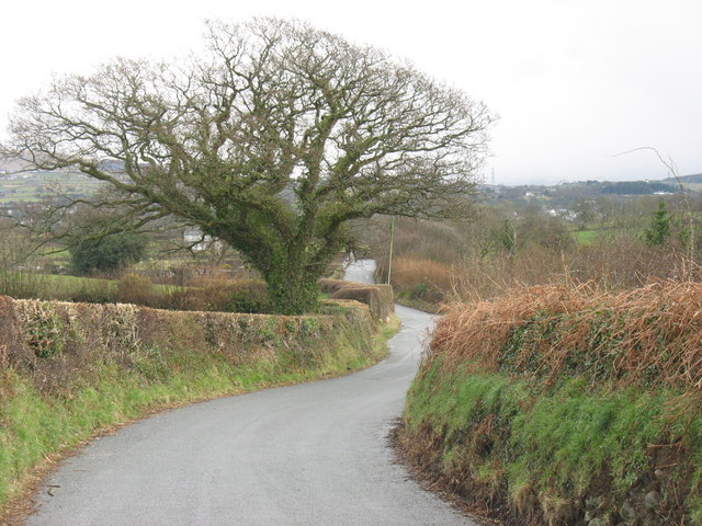 Neatly trimmed hedges on the minor road between Dinas and Rhos Isaf