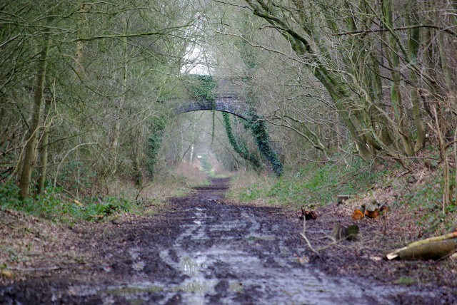 The disused railway line behind Crackley Wood