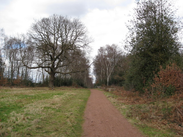 Sherwood Forest - View of The Centre Tree