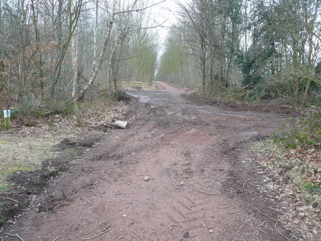 Sherwood Forest - View of Footpath Junction near to The Centre Tree