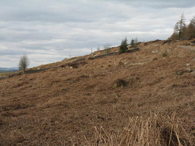 Bracken on Roundfell