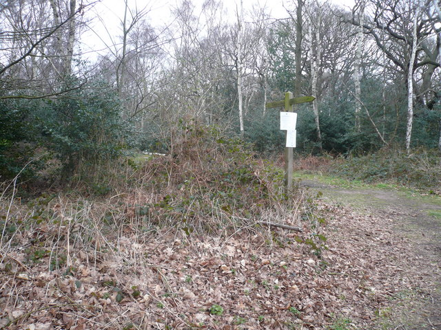 Sherwood Forest - View of Footpath near to The Centre Tree
