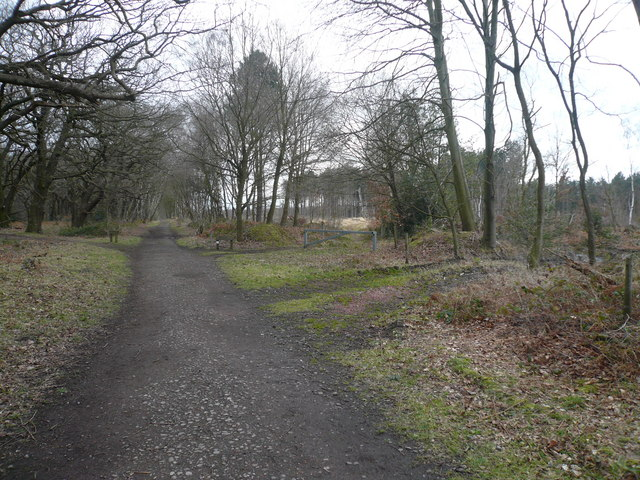 Sherwood Forest - Several paths join Robin Hood Way near to The Centre Tree