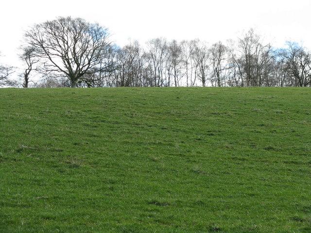 Pasture near Corsua