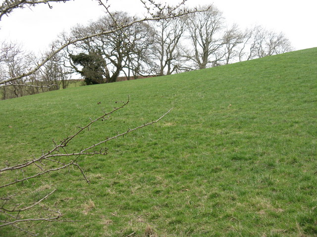 Field and trees at Meikle Firthhead