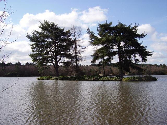Island on Hawley Lake