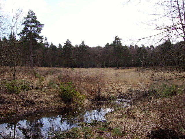 Heathland to the south of Heath Lake