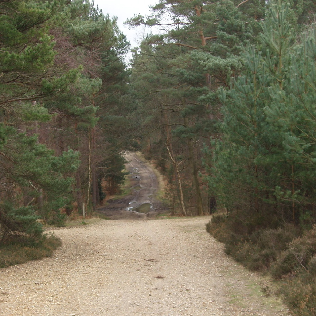 Track near Caesar's Camp, Swinley Forest