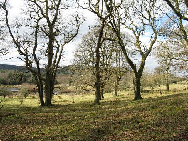 Lochan and oak woodland by Fairgirth Lane
