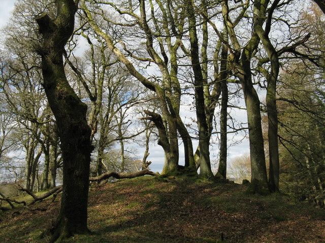 Oaks at Fairgirth