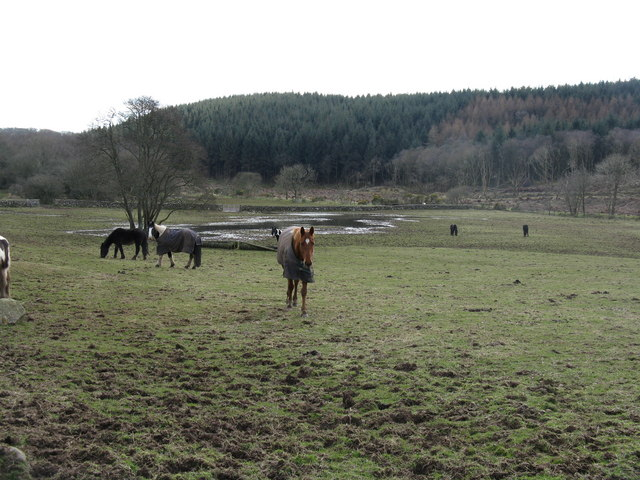 Field with horses at Barend