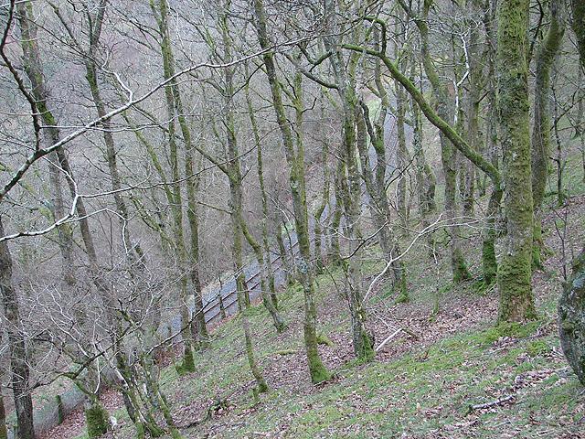 Vale of Rheidol Railway at Derwen (8)