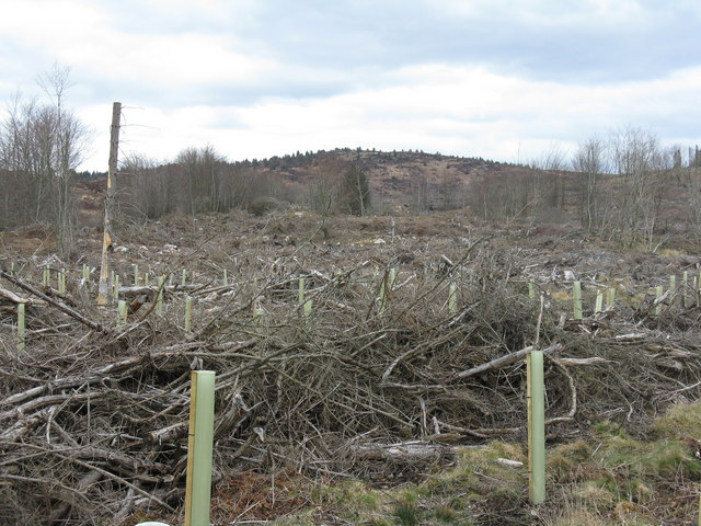 Forestry left-overs, near Tannoch Burn