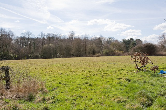 Field at end of The Drove, West Wellow