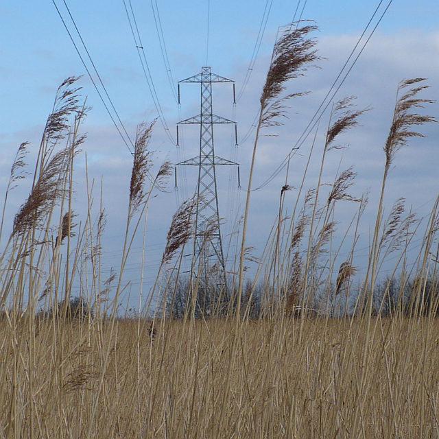 Reedbeds and electricity pylon, Newport Wetlands
