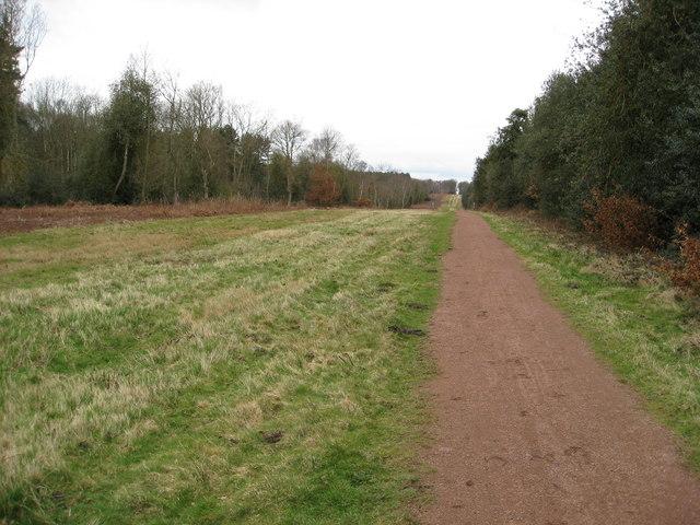 Sherwood Forest - Clipstone Old Quarter