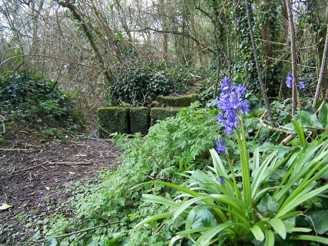 Early bluebells, Bishopstone
