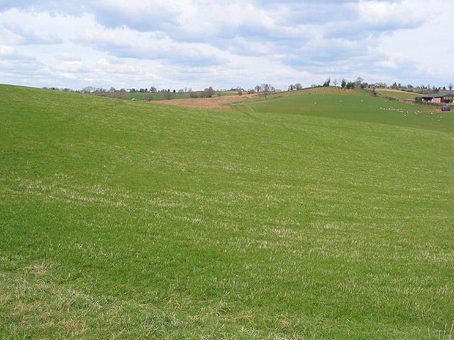 Rolling hillside near Holder's Farm