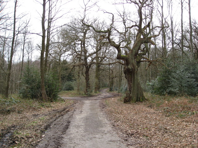 Sherwood Forest - Blackpool Plantation to the Right