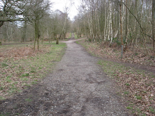 Sherwood Forest - Five Footpaths Meet