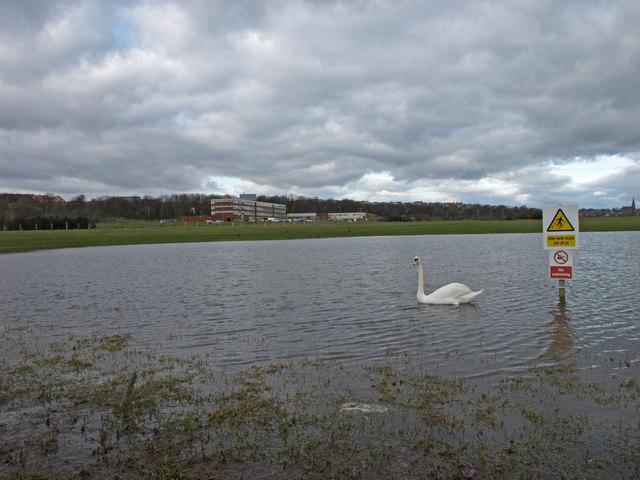 Pond, Auchenharvie Golf Course