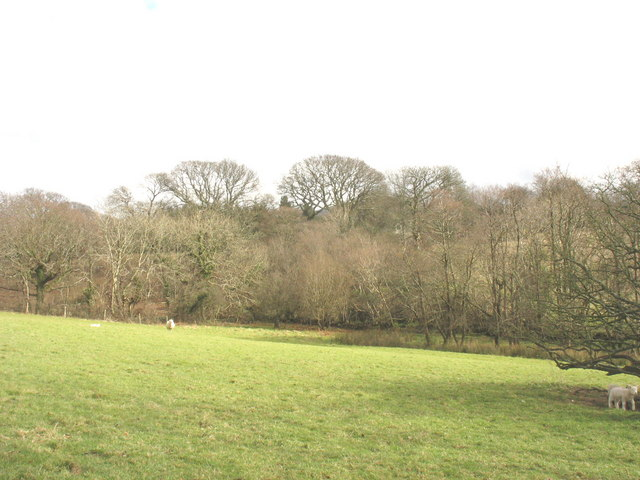The wooded Carrog valley