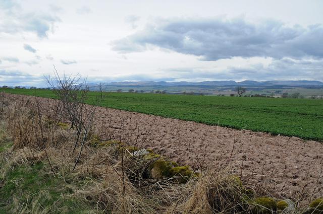Farmland Wester Cultmalundie Farm