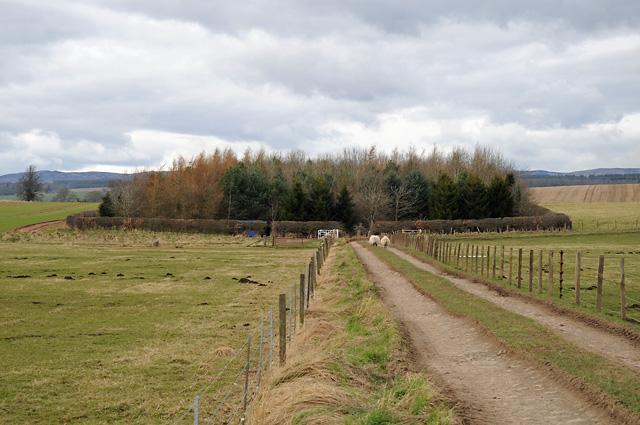 Farm Track and Wood