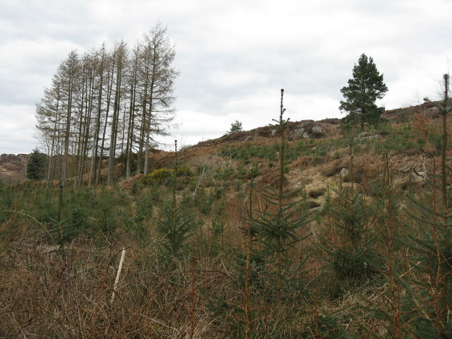 Reafforestation on Auchenhay Hill