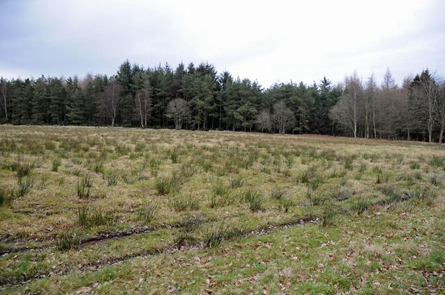 Farmland and the Edge of Cairnie Wood