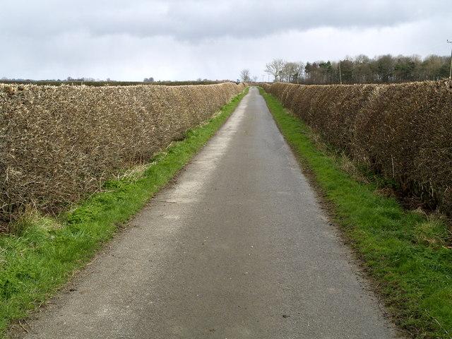 Farm road near Decoy