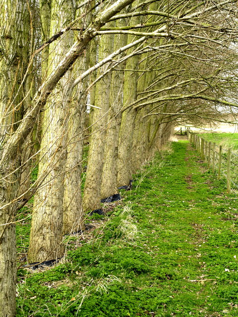 Footpath next to a Copse