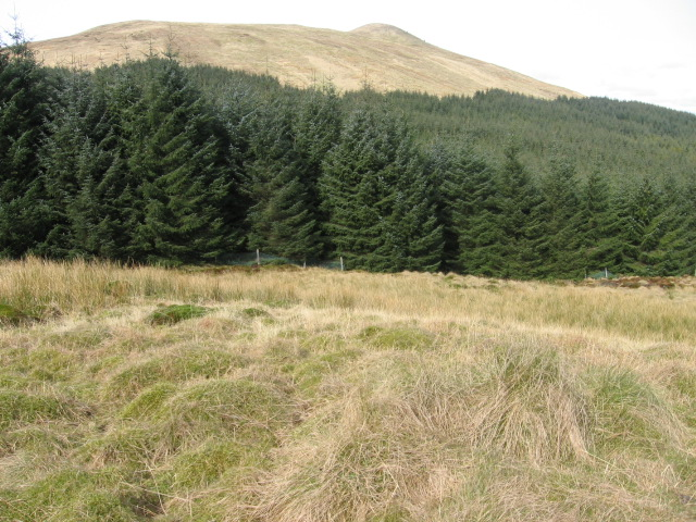 Towards Meikle Bin from forest clearing on Black Hill