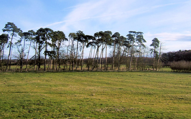 Ridge and Furrow near Hawkhills, Easingwold, Yorkshire