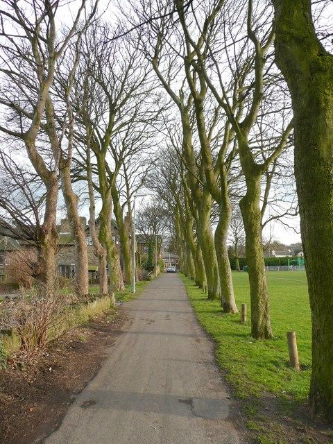 Avenue of trees, Almondbury