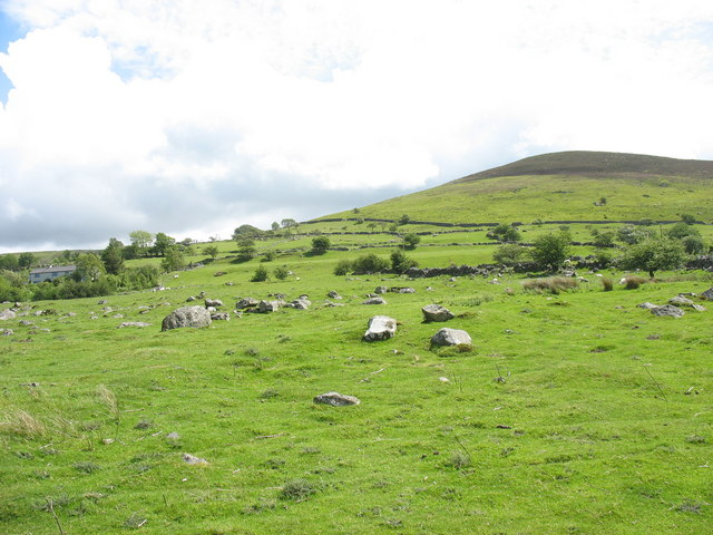 Sheep grazings at Cae'r Mynydd