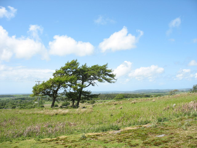 Scots pines and rough grazing on the old wartime bomb storage base