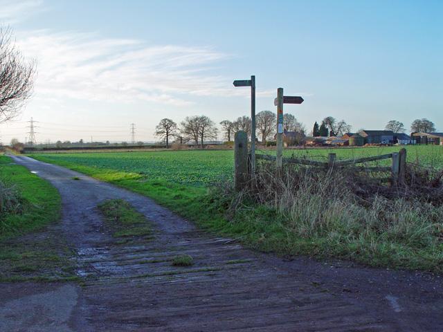 Green Lane to Swine