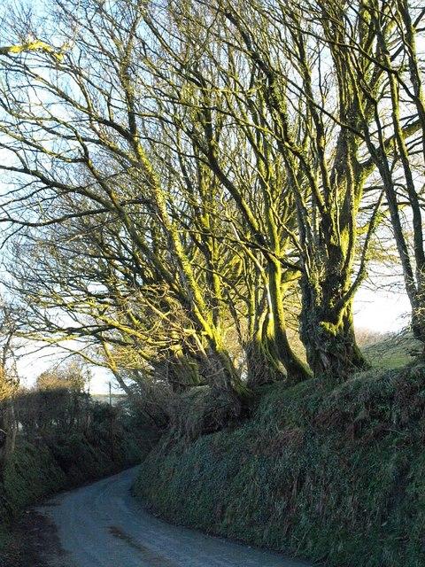 Lane near Treglasta Bridge