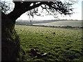 SX1784 : Farmland and shelter belt by Derek Harper