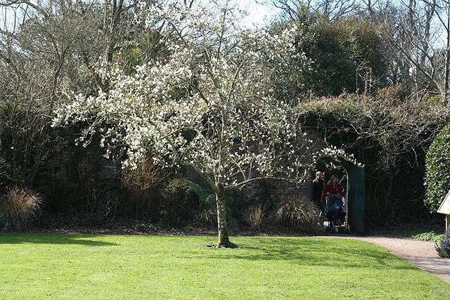 Kingswear: Greenway gardens