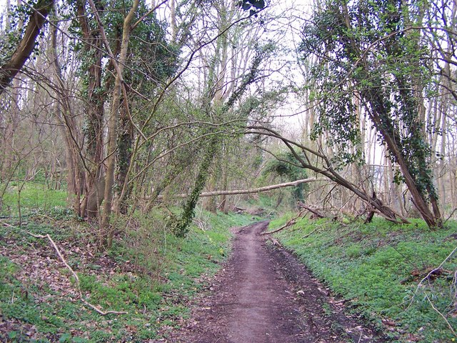 Footpath through Park Wood
