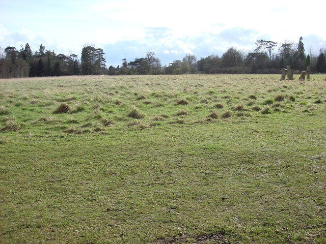 Open area, Nowton Park