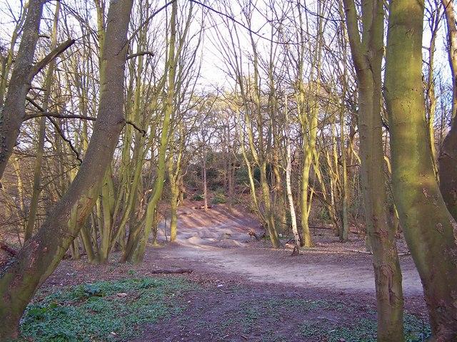 Heath Wood