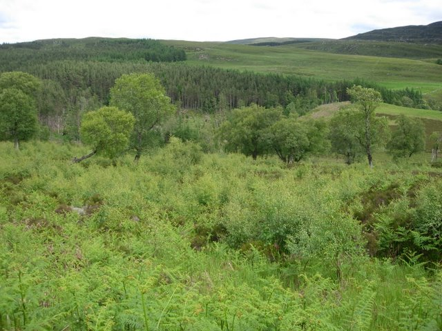 Old Moorland/New Woodland