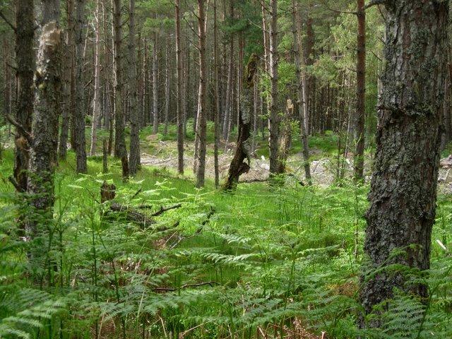 Woodland at Corrimony