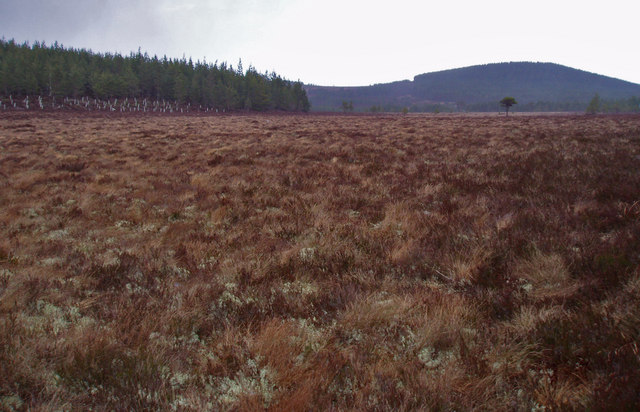 Boggy Clearing