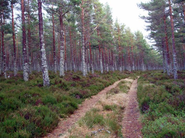 Baddengorm Woods