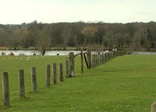 Part of Hainault Forest Country Park